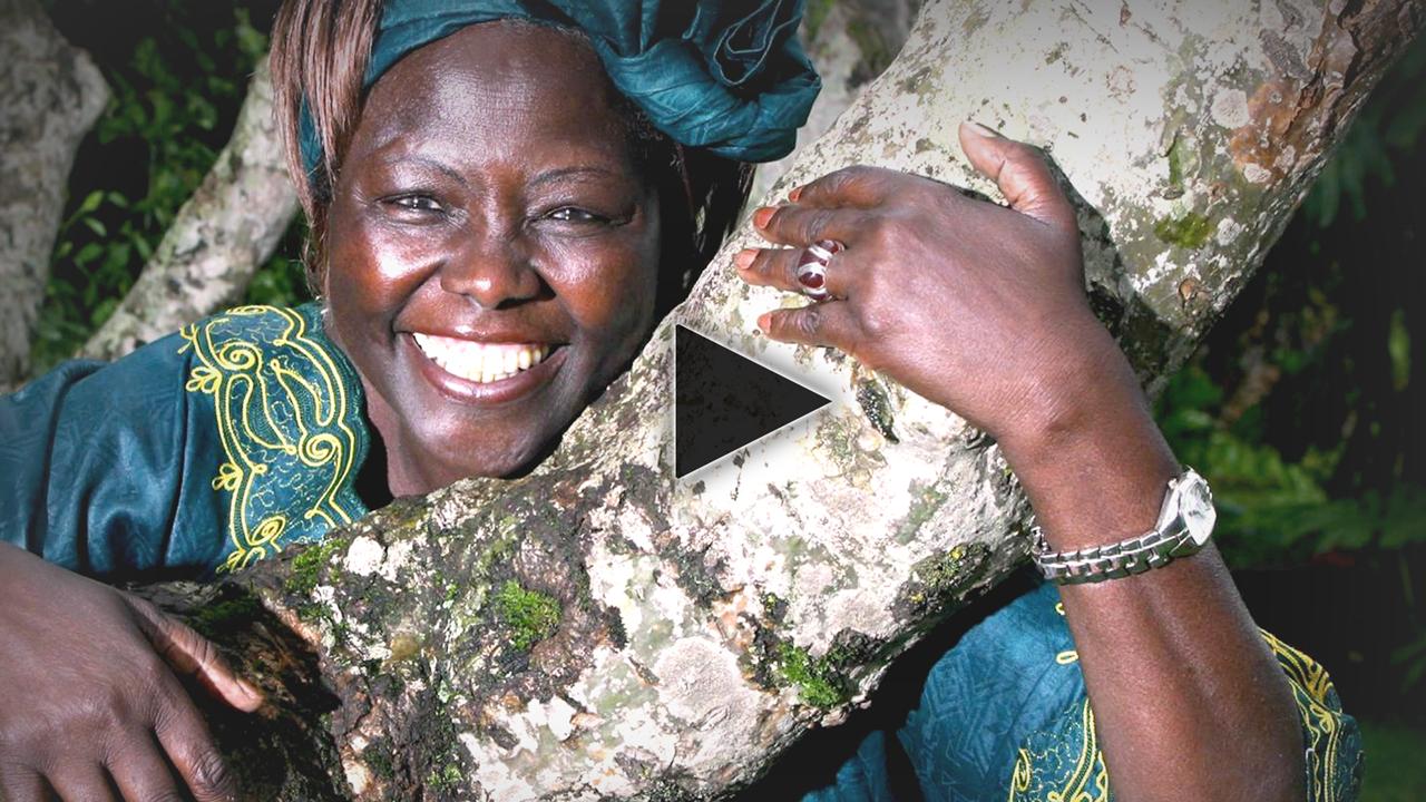 Wangari Muta Maathai Video